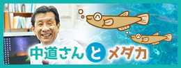 中道さんとメダカ